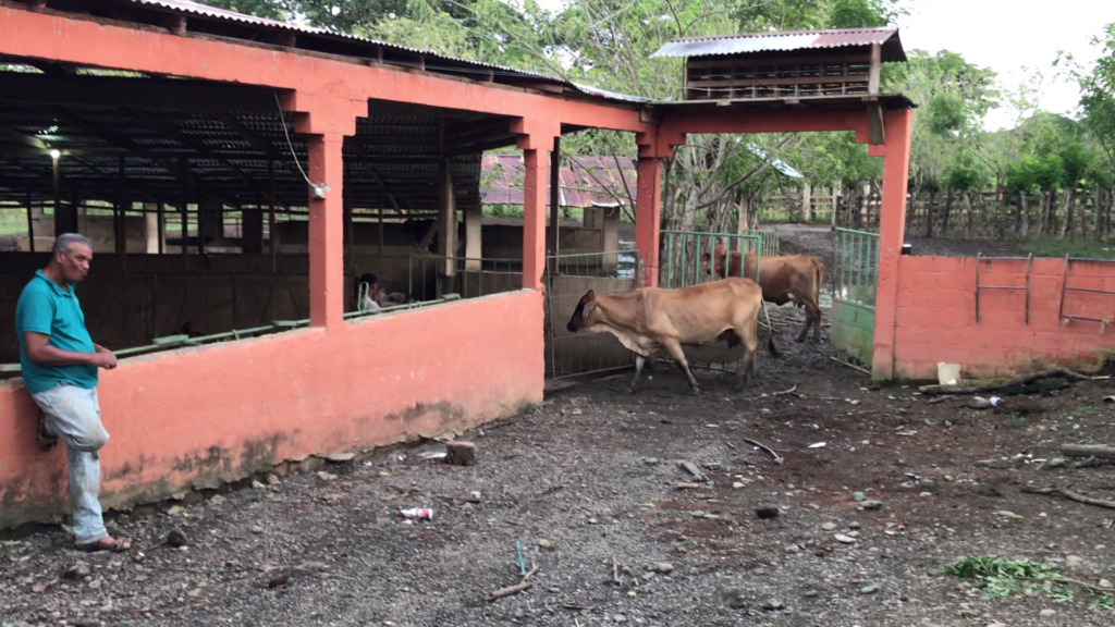 projet d'investissement dans une ferme Bio en République Dominicaine